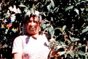 08-01-96 - Woman does coffee harvest