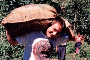 08-01-96 - Harry does coffee harvest